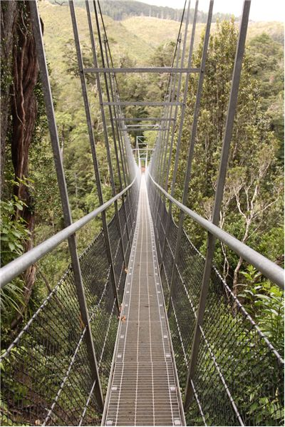 Picture Of Swing Bridge Waiohine Gorge Carterton New Zealand