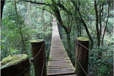 Picture Of Swing Fragile Bridge In El Salvador